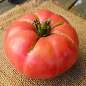 Tomate rosado peso aproximado bandeja 750 grs